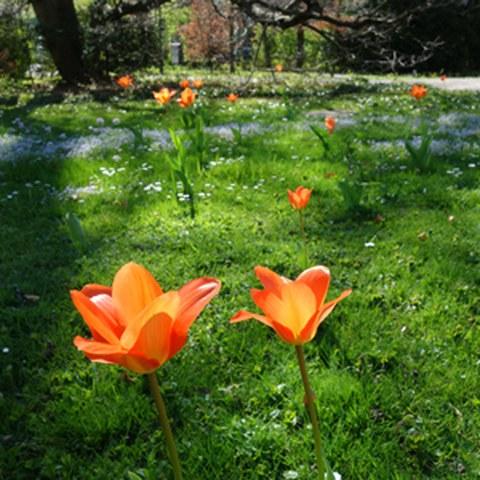 Park im Frühling. Vergrösserte Ansicht