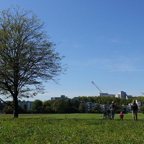 Unbebaute Grünflächen am Stadtrand gewährleisten die Frischluftzufuhr zum Siedlungsgebiet. (Foto: Irene Küpfer). Vergrösserte Ansicht