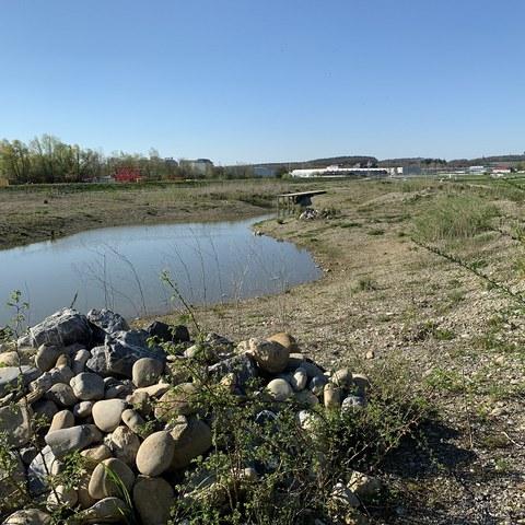 Hochwasser-Rückhalteraum - auch ökologisch und als Erholungsgebiet wertvoll. (Foto: Irene Küpfer). Vergrösserte Ansicht